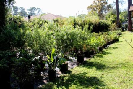 best plant nursery emerald coast florida
