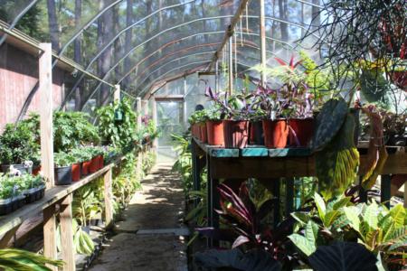 emerald coast nursery greenhouse